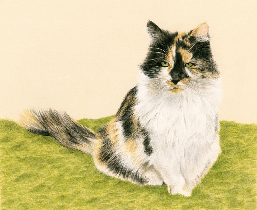 CAT_Coloured_Pencil_Portrait_Tamsin_Dearing_Copyright_2014