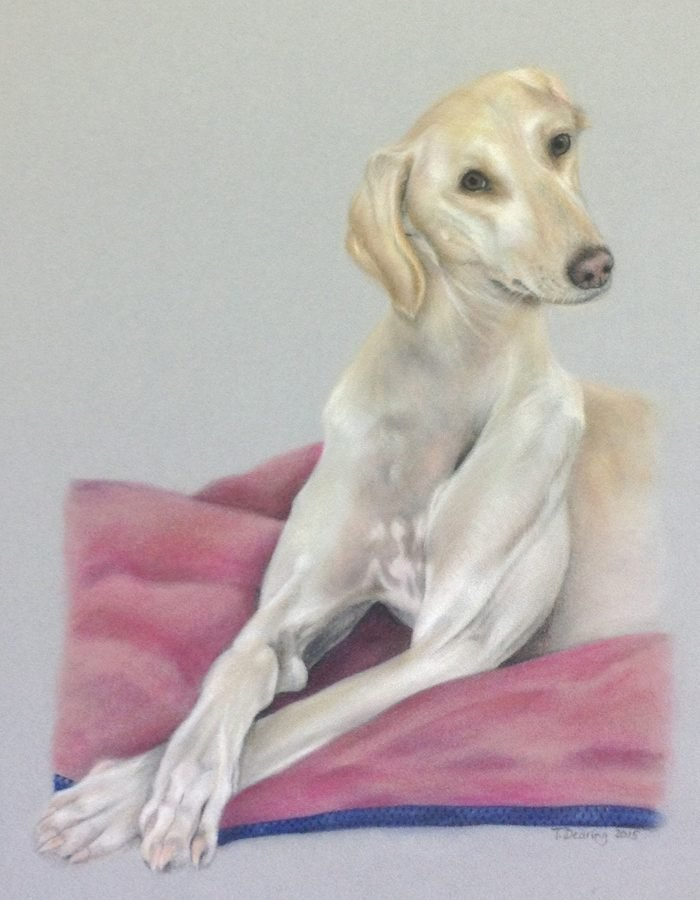 Clyde_Pastel_Portrait_Tamsin_Dearing_Copyright_2015
