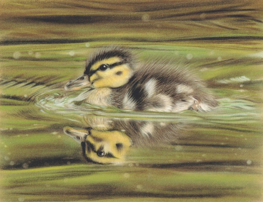 Duckling_Pastel_Portrait_Tamsin_Dearing_Copyright_2015