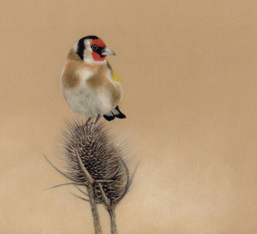 Goldfinch_Pastel_Portrait_Tamsin_Dearing_Copyright_2016