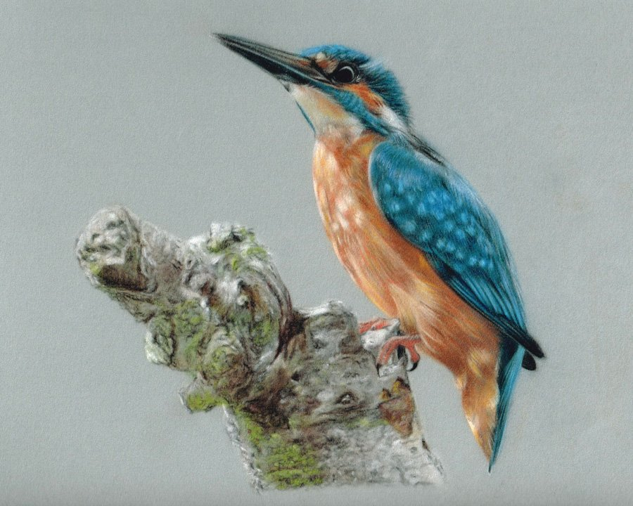 Kingfisher_Pastel_Portrait_Tamsin_Dearing_Copyright_2014