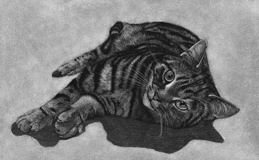 Moggy_Coloured_Pencil_Portrait_Tamsin_Dearing_Copyright_2014