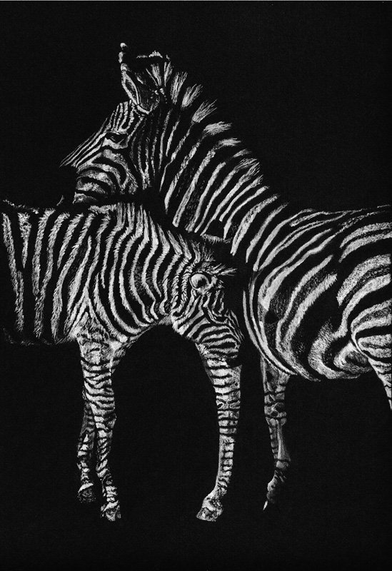 Monochrome_Mothering_Pastel_Portrait_Tamsin_Dearing_Copyright_2016