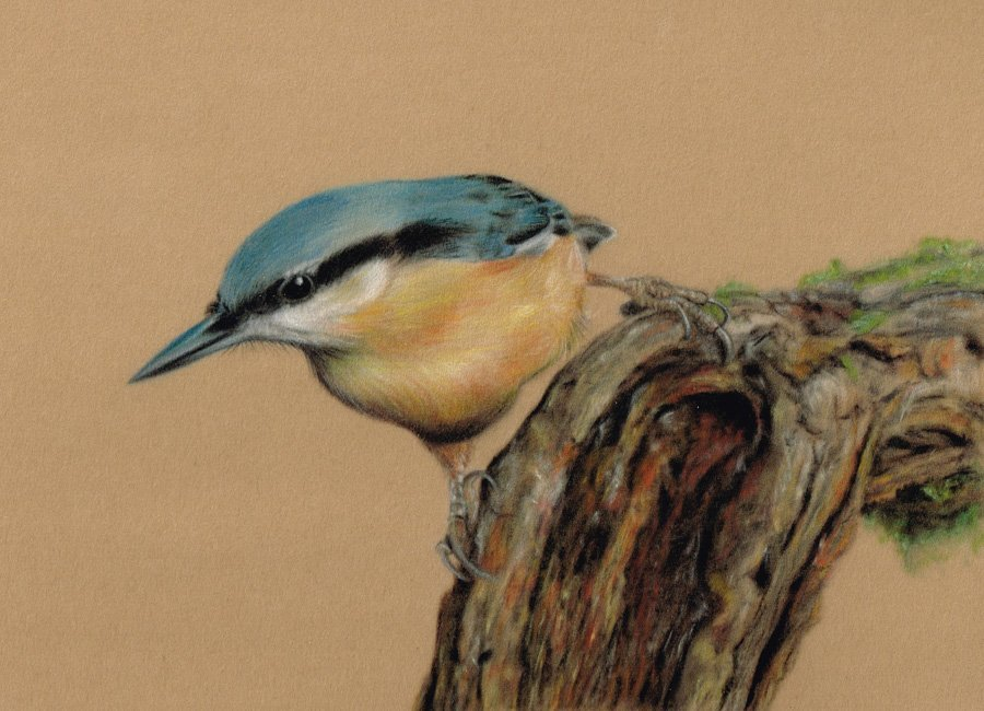 Nuthatch_Pastel_Portrait_Tamsin_Dearing_Copyright_2015