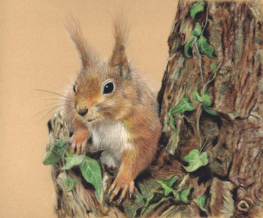 Red_Squirrel_Pastel_Portrait_Tamsin_Dearing_Copyright_2016