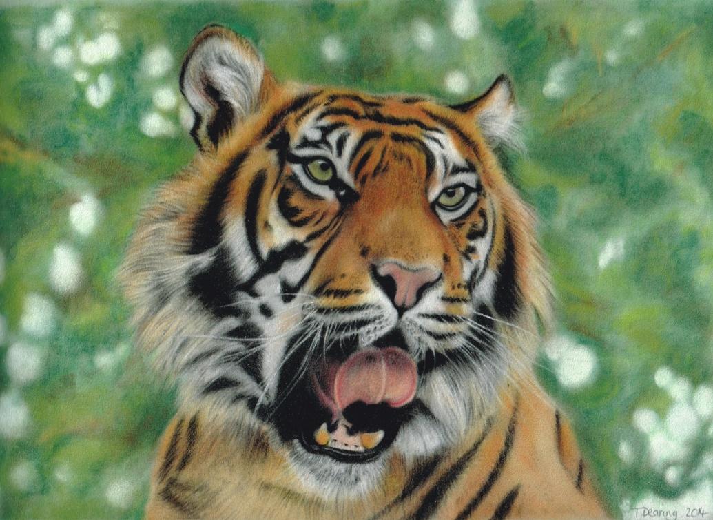 Tiger_Pastel_Portrait_Tamsin_Dearing_Copyright_2014
