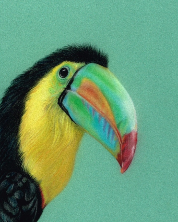Toucan_Pastel_Portrait_Tamsin_Dearing_Copyright_2016